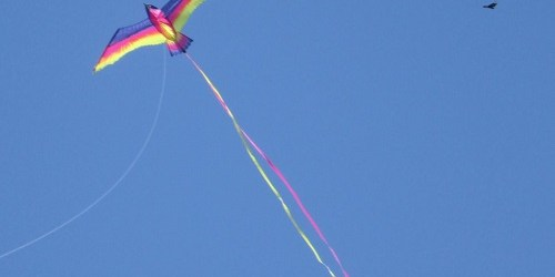 Kite | Sassy Sandpipiper | M.R. Wilson