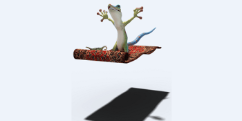 Gecko | Animal | Wildlife