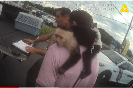 Monkey | Pasco Sheriff | Arrests