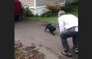 Guido the Pug Returns Home