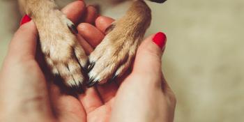 Pets | Animals | Animal Welfare
