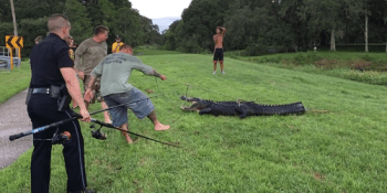 Alligator | Clearwater Police | Wildlife