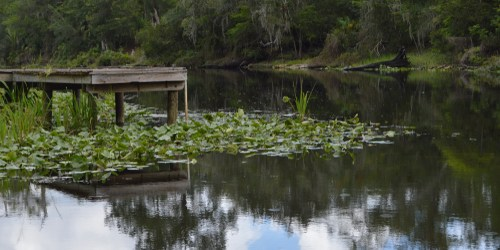 Withlacoochee River | Dock | TB Reporter