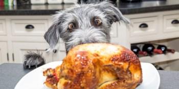 Thanksgiving | TB Reporter | Holidays