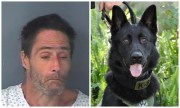 Police Dog Drags Suspect from Under Bed