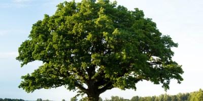 Tree   Arbor Day   Tree City USA
