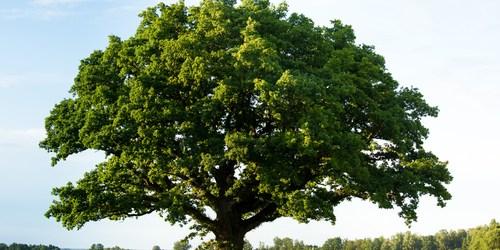 Tree | Arbor Day | Tree City USA