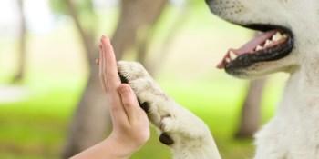 Dogs | Pets | Animals
