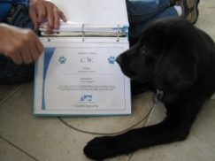 Guide Dogs | Animals | Guide Dog Training