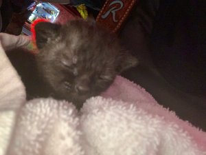 Kittens Saved   Pasco Fire Rescue   Public Safety