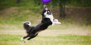 Dogs | Paw Park | Dog Park