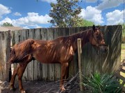 Riverview Man Accused of Starving Horses