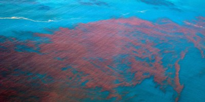 Red Tide | Algae Bloom | Environment