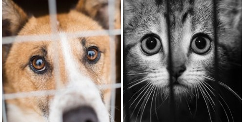 Pet Adoption | Homeless Pets | Dogs and Cats