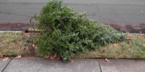 Christmas Tree | Environment | Recycled Tree