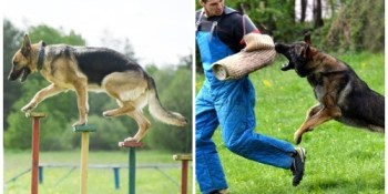 Dogs | Police Dogs | Crime