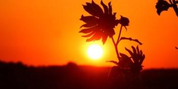 Pasco County | Sunset | TB Reporter