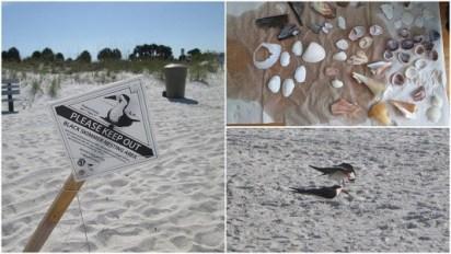 St Pete Beach | Sassy sandpiper | TB Reporter