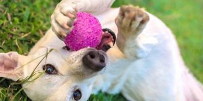Dog Park   Pets   Recreation