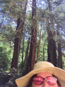 TC in the Redwoods
