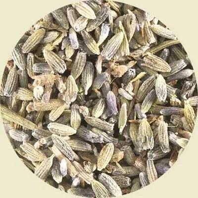 Lavender herbal