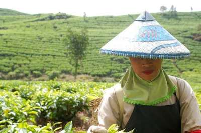 tea_picker_hat