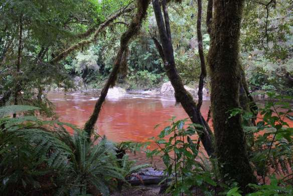Tannin-colored_water_of_Oparara_River