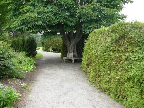 tree_circling_bench