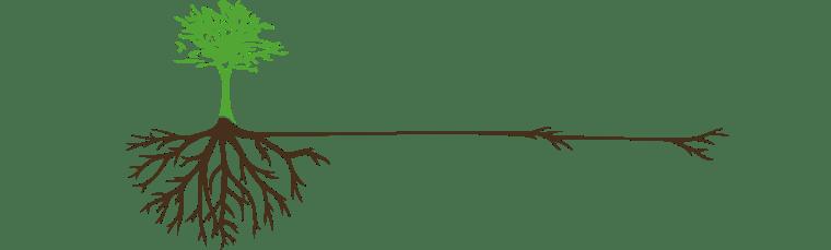 sustainability-tree-roots-01