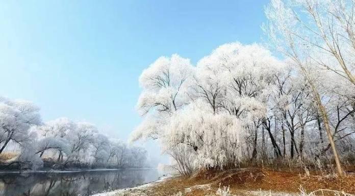 ป่าไม้งาม กลางหิมะขาว ในเทียนจิน