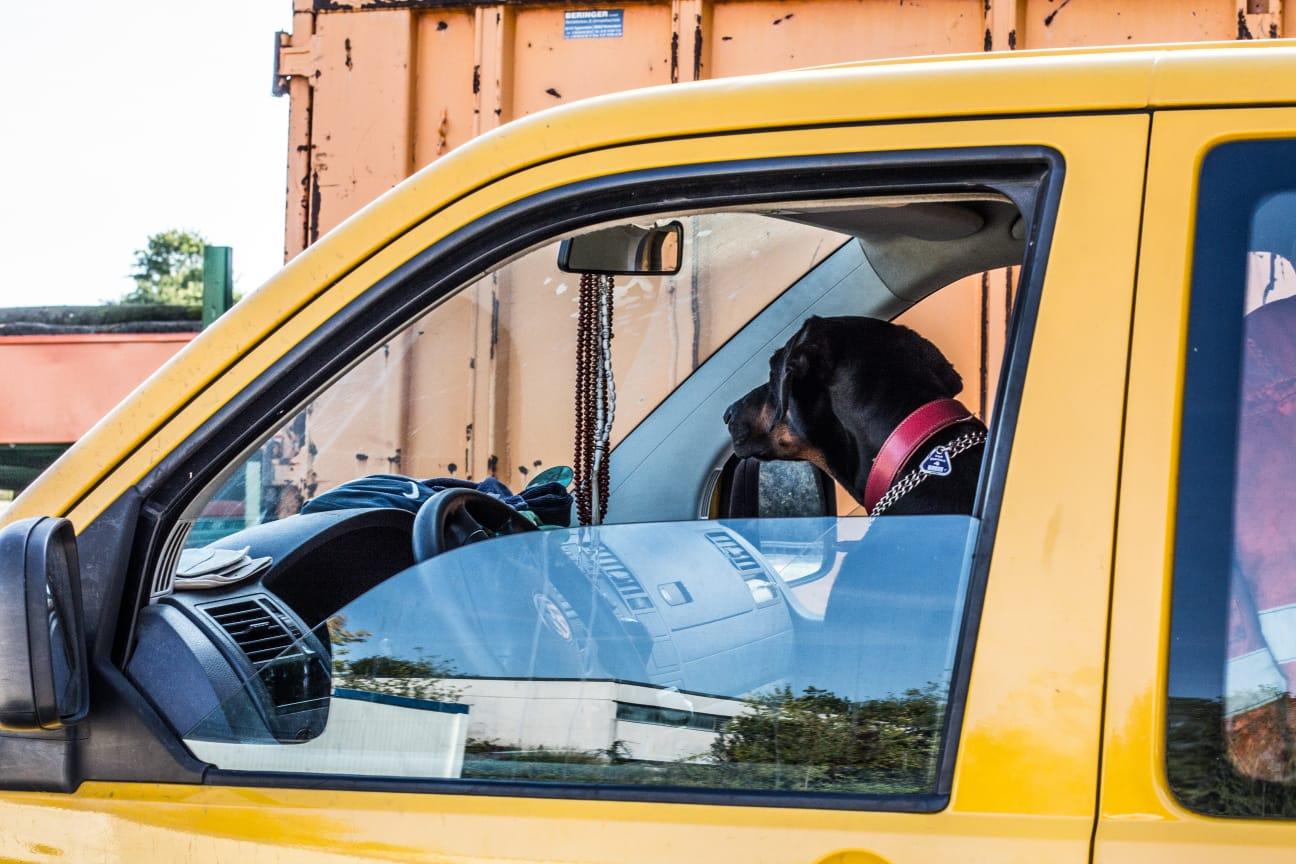 Rettungshunde: Warten auf den Einsatz