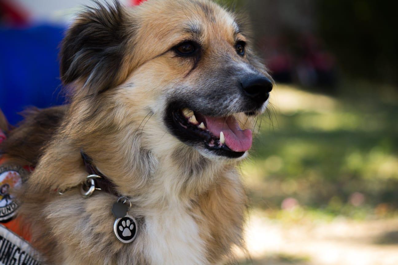 BRH Bundesverband Rettungshunde
