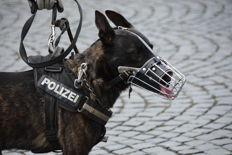 Polizei-Hund