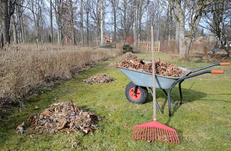 Leaf Clearing - TDG Garden Services