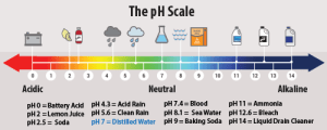 Designing a ColorChanging Paint Using pH  Activity