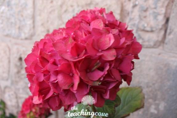 Peru flower