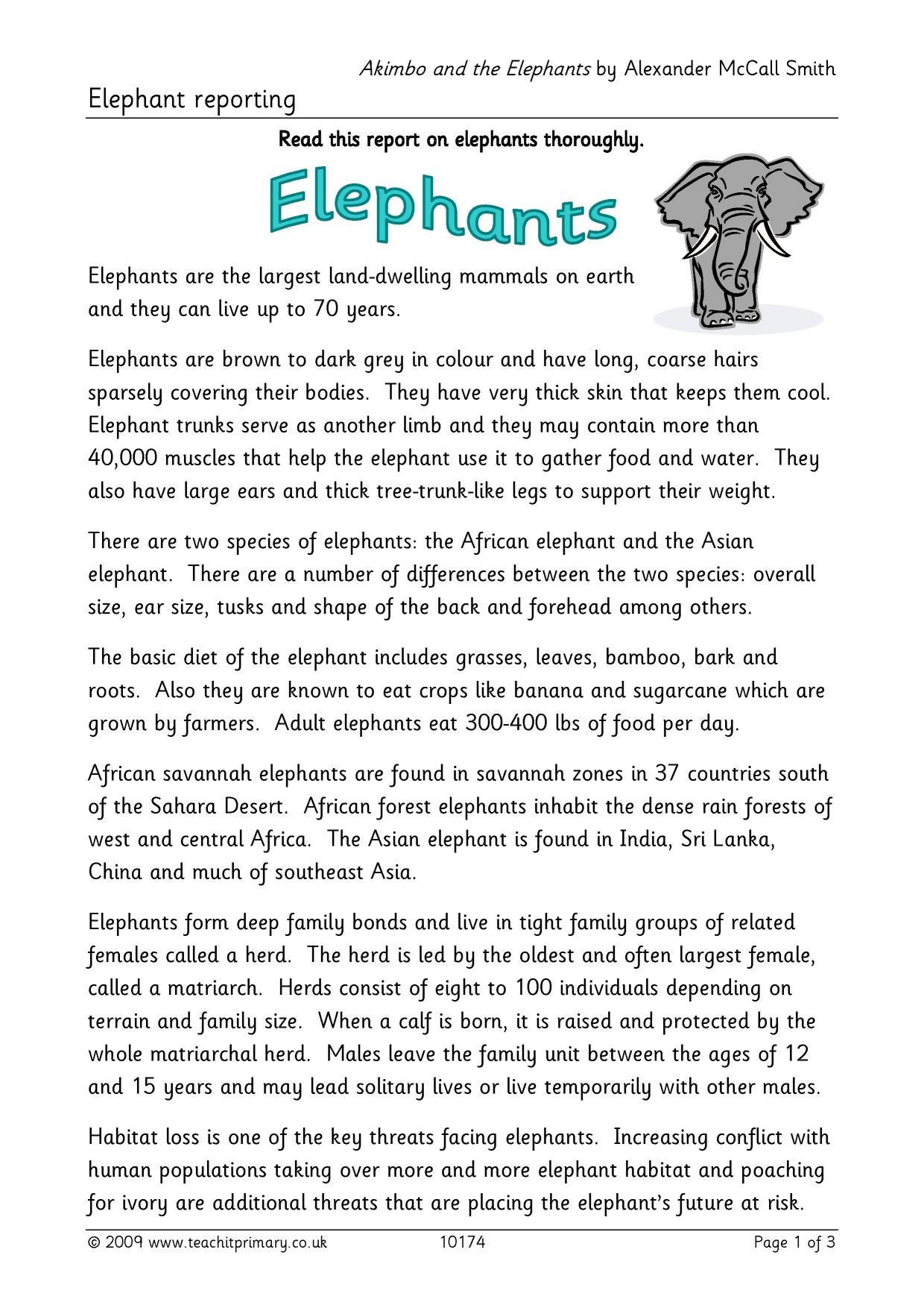 Elephant Report Writing