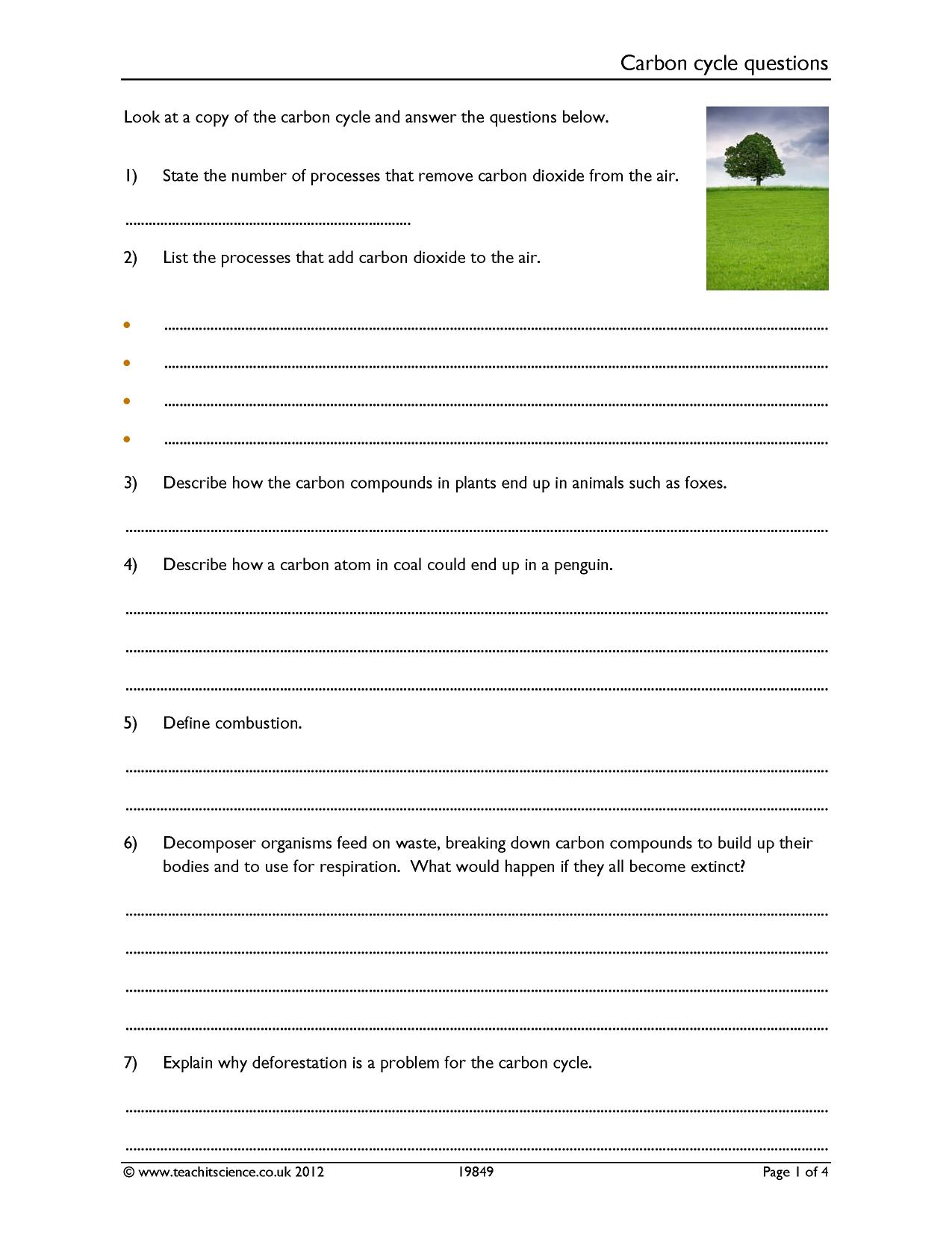 Carbon Cycle Questions Worksheet