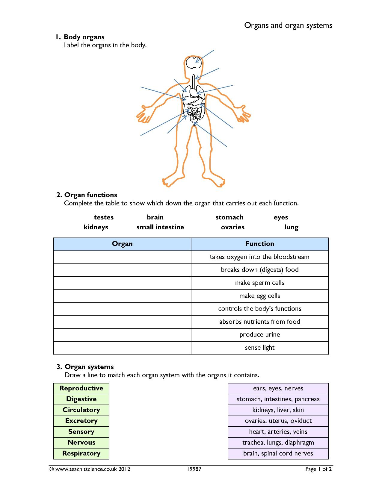 Printable Human Body Systems Worksheets