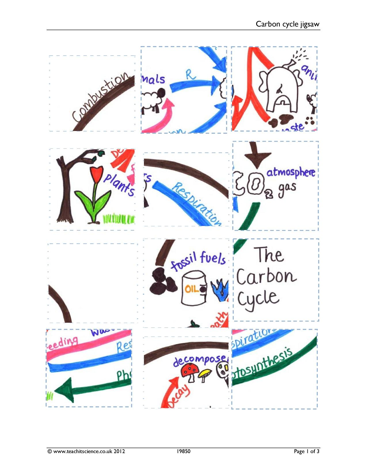 Carbon Cycle Jigsaw