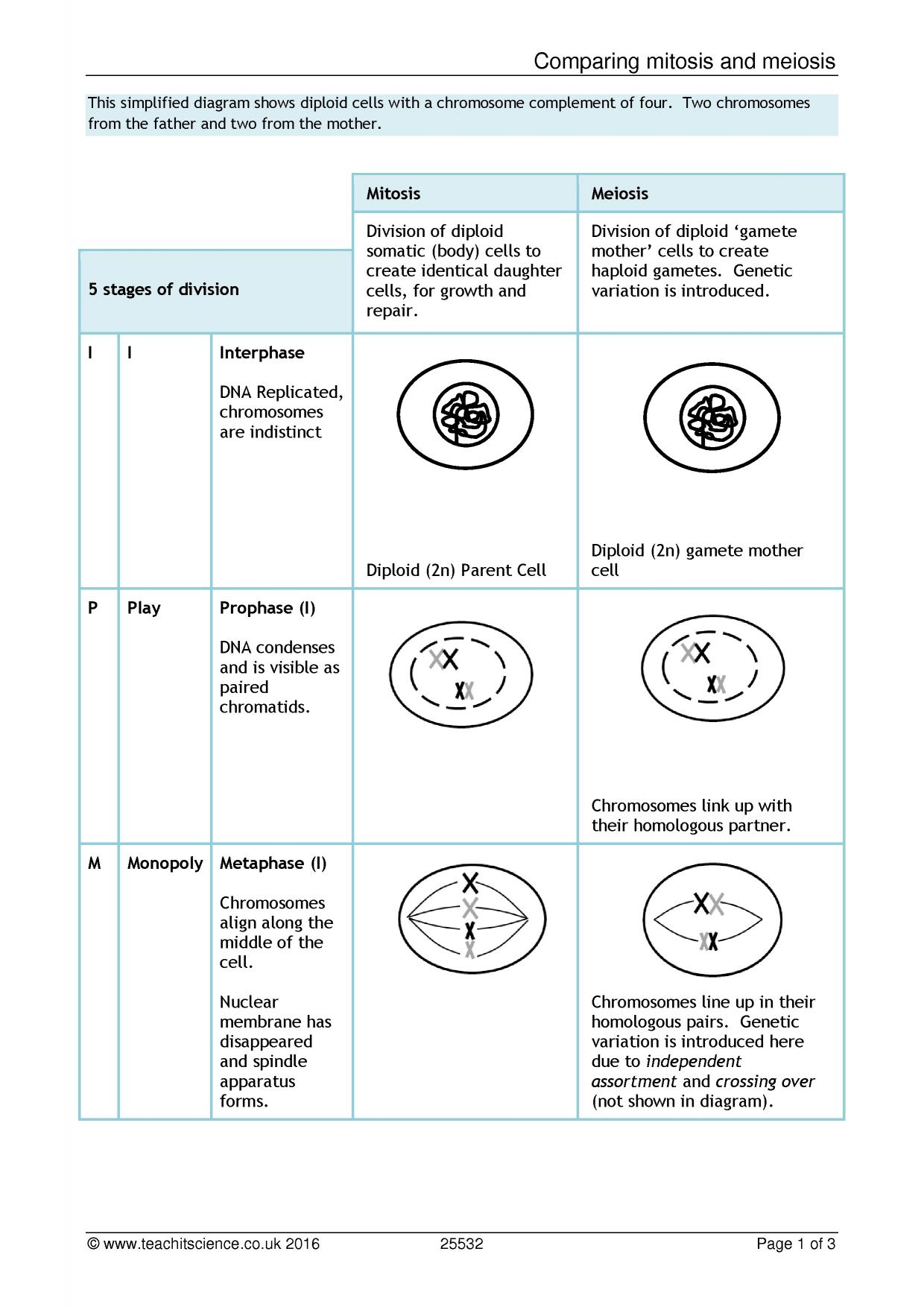 Worksheet Answers Comparing Mitosis And Meiosis Worksheet