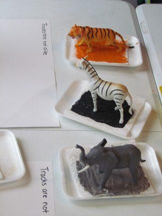 Preschool activity | Animal tracks are not alike