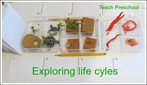 Exploring life cycles
