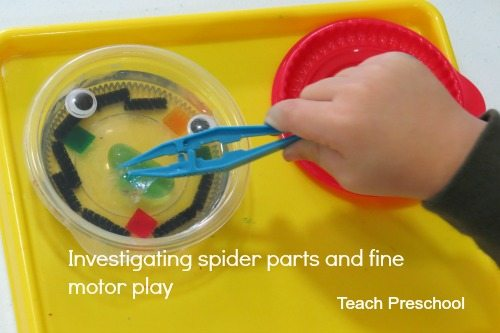 Investigating the parts of a spider through fine motor play