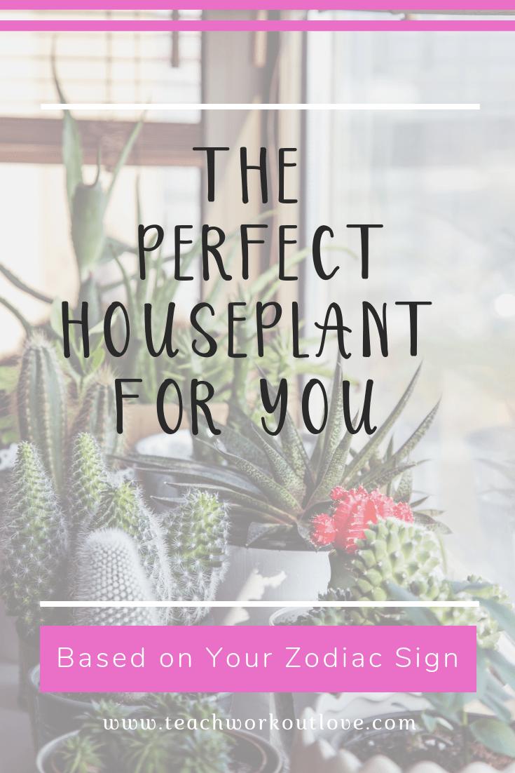 houseplant-for-you-for-zodiac-sign-teachworkoutlove.com