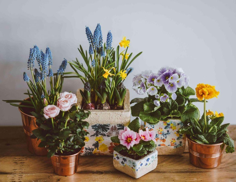 houseplants-for-zodiac-sign
