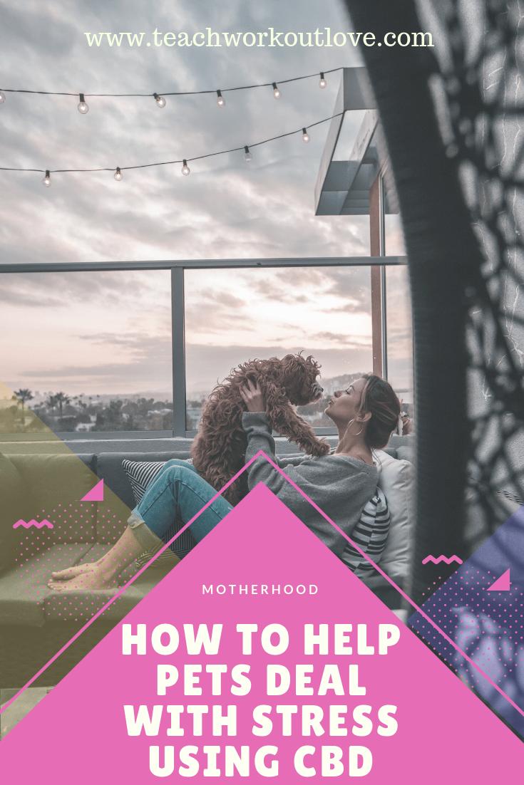 help-pets-deal-with-anxiety-teachworkoutlove.com