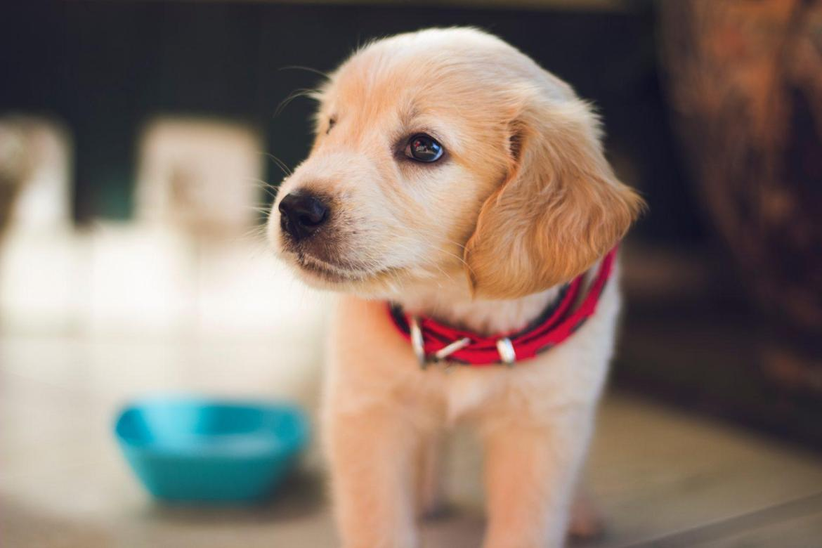 Surprising Benefits Of Having A Dog You Didn't Know About