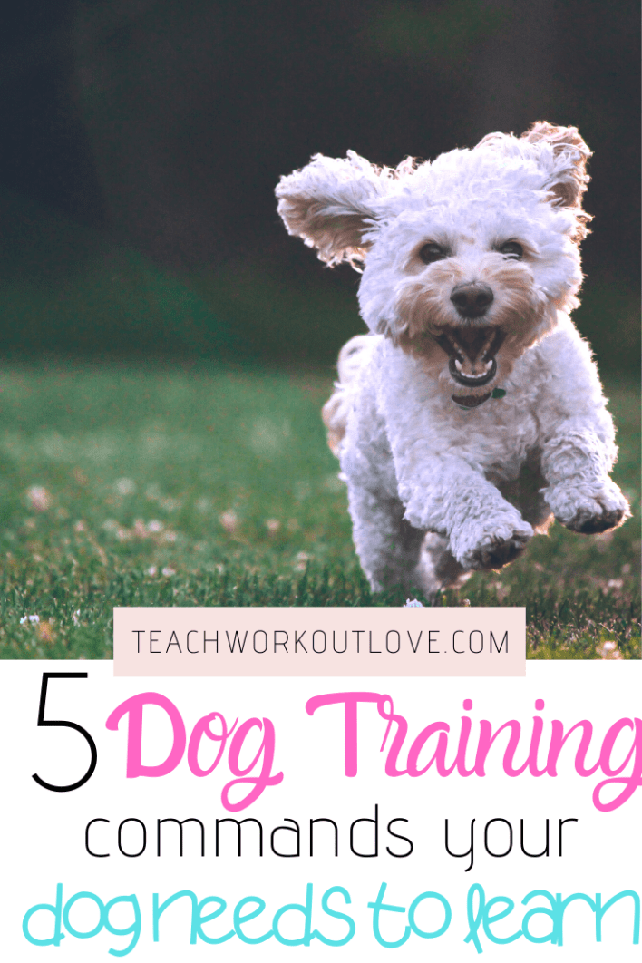 When it comes to training your family pet, you need to ensure you have the right commands. Here's the top 5 dog training commands your dog needs to learn.