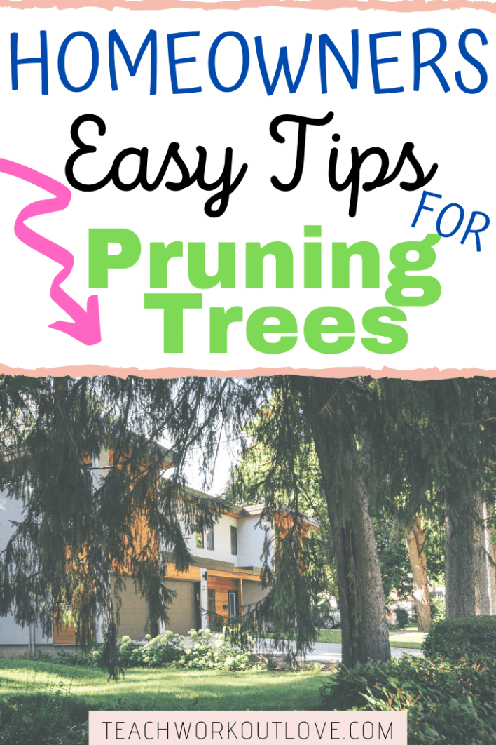 You can be pruning tall trees on your own but it's important to know exactly how so that it's effective and safe for the tree and everybody else.